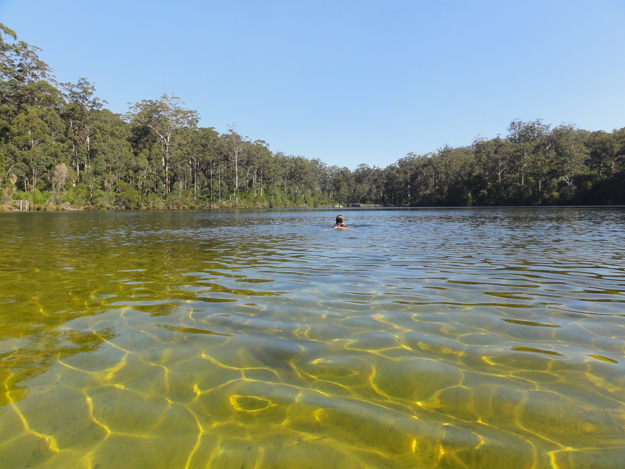 This is Big Brook Dam in Western Australian near Pemberton in the south. The water was clear with a sandy base. It was a beautiful place for a swim.