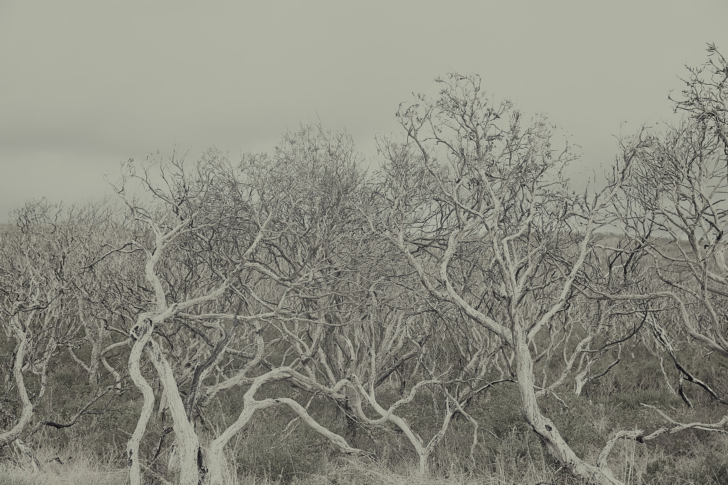Patrick_Schuttler_Landscape_026.jpg
