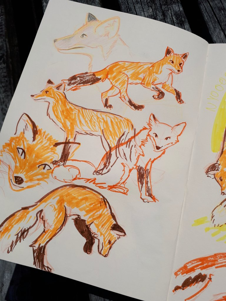 fox sketches1.jpg