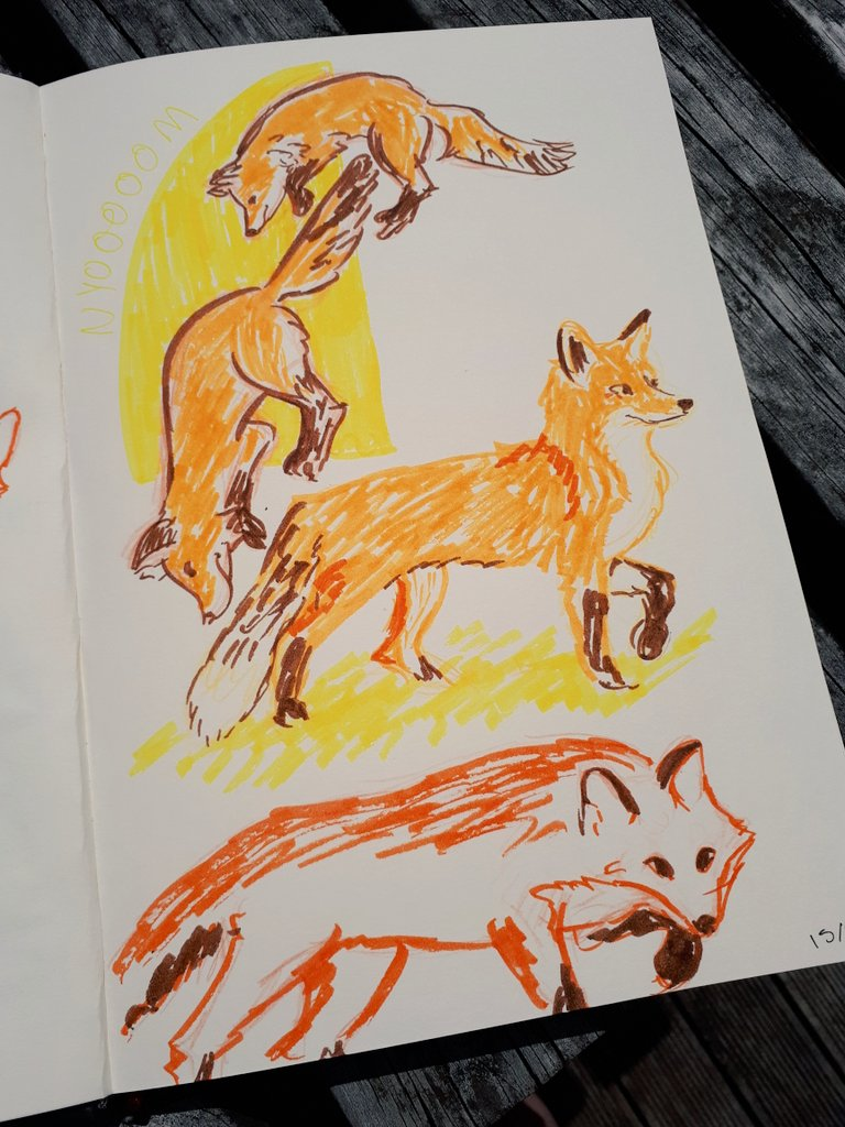 fox sketches2.jpg