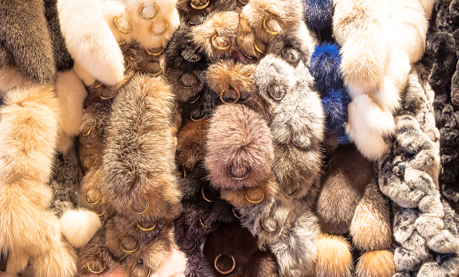 Our furs