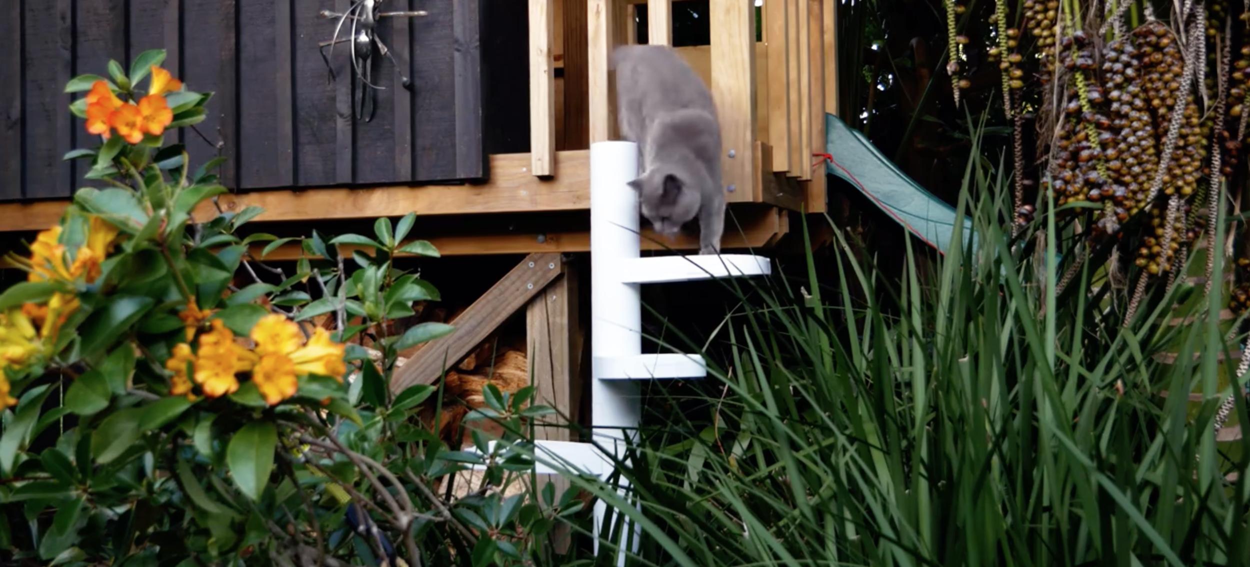 Globex-engineering-product-design-consultancy-MonkeeTree-Cat