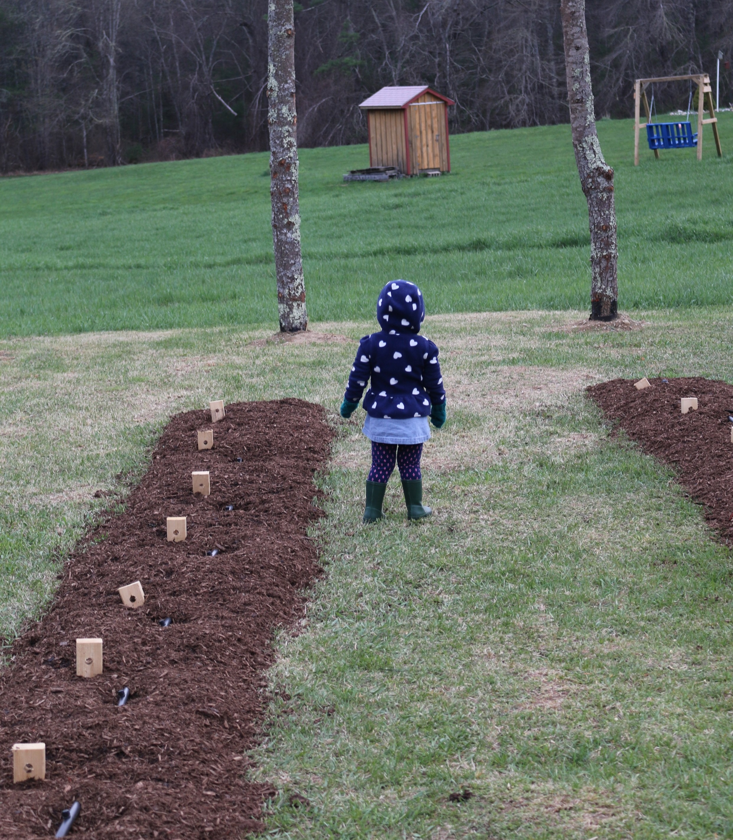All Planted