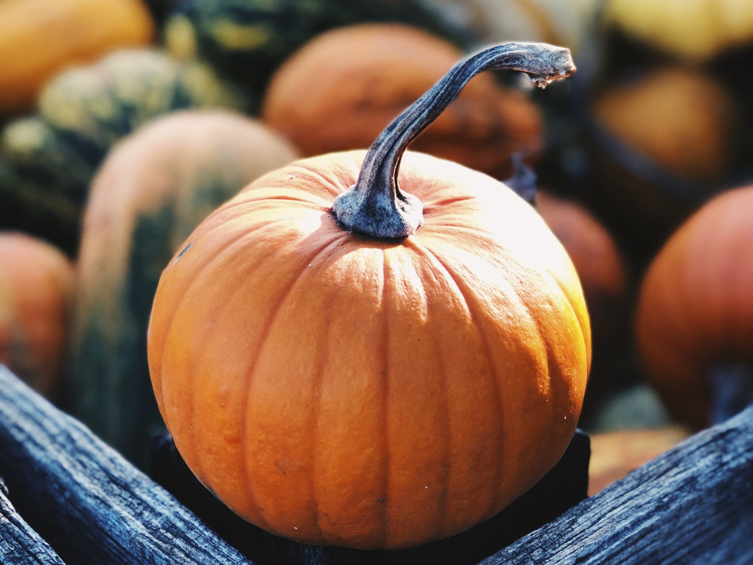 Pumpkin Patch - October marks a special time of year for our community. So many fun and meaningful things happen during fall. As a community we gather at the Parkhurst Pumpkin Patch to enjoy a bonfire, cookout, and hayride.