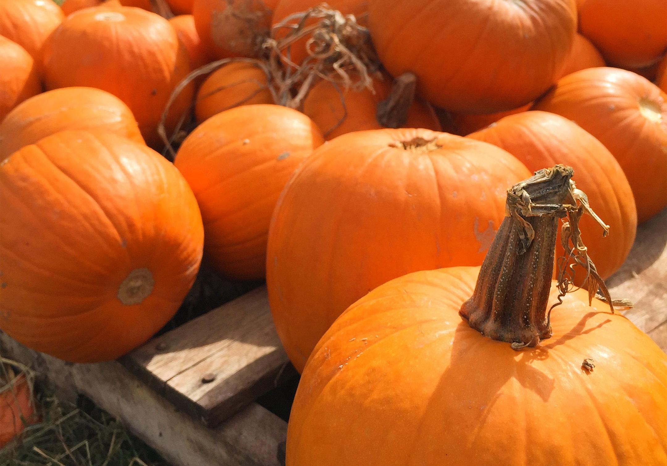 Pumpkin Patch - OCTOBER 21st 3pm - 6pm