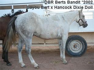 Bandit_0.jpg