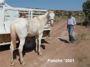 Poncho_0.jpg