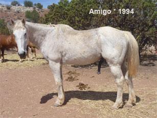 Amigo_1.jpg