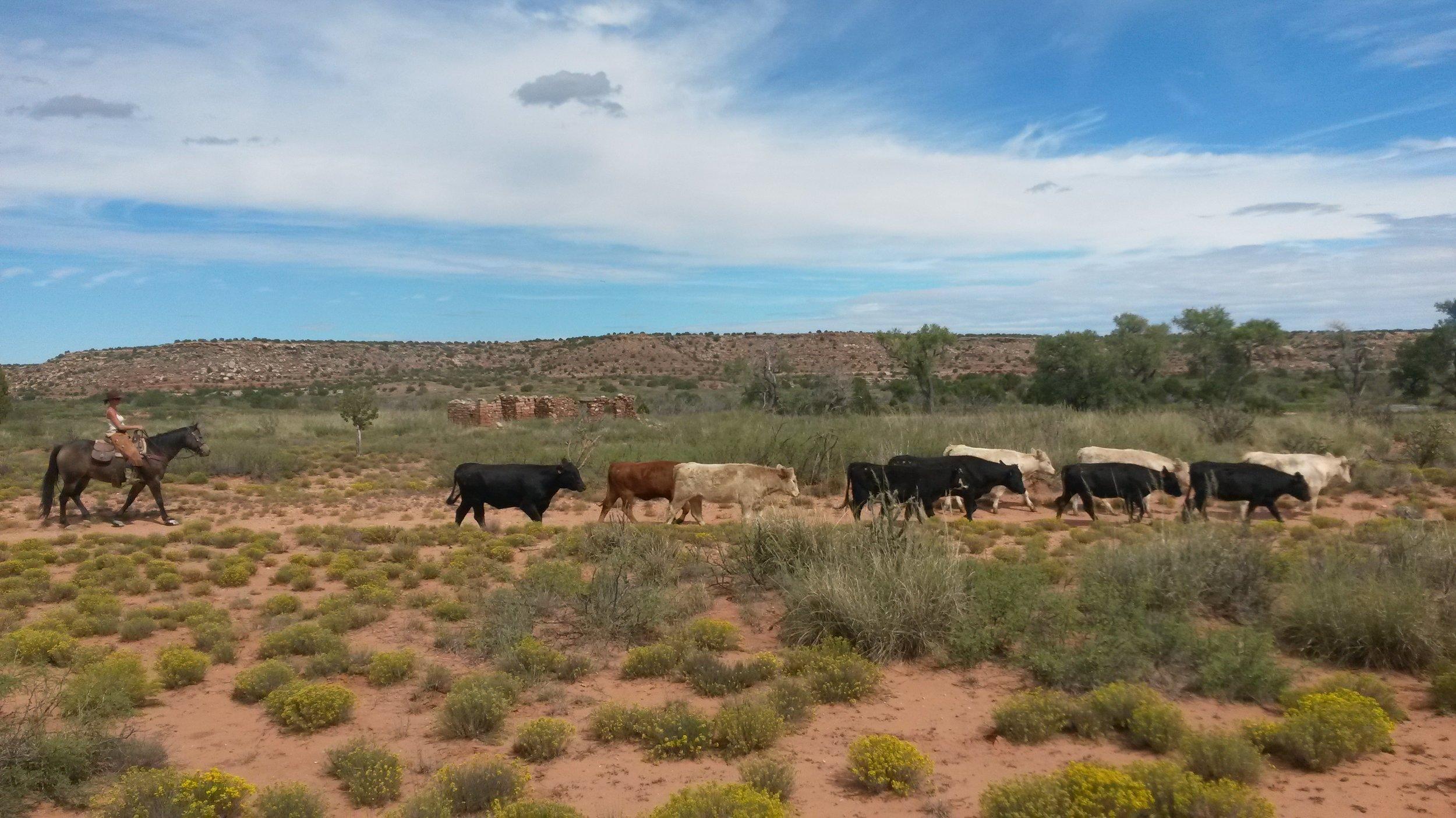 ! ranch slide 8.jpg