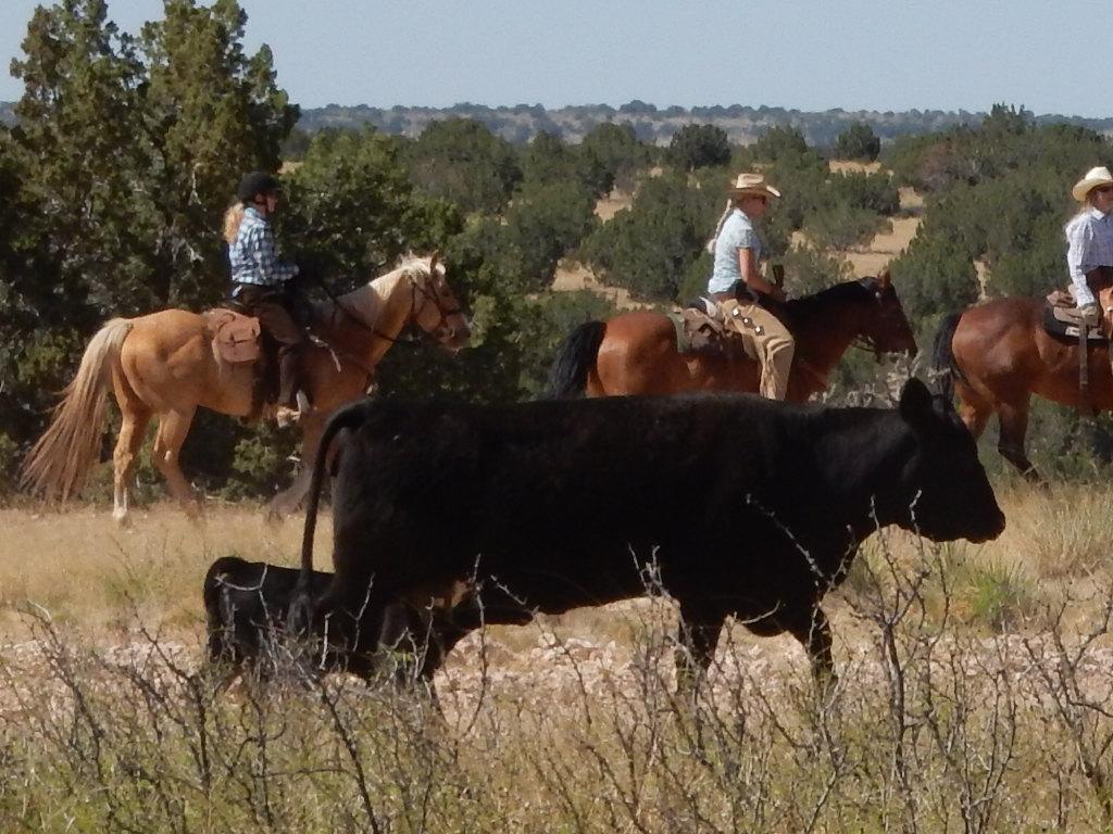 ! ranch slide 10.JPG