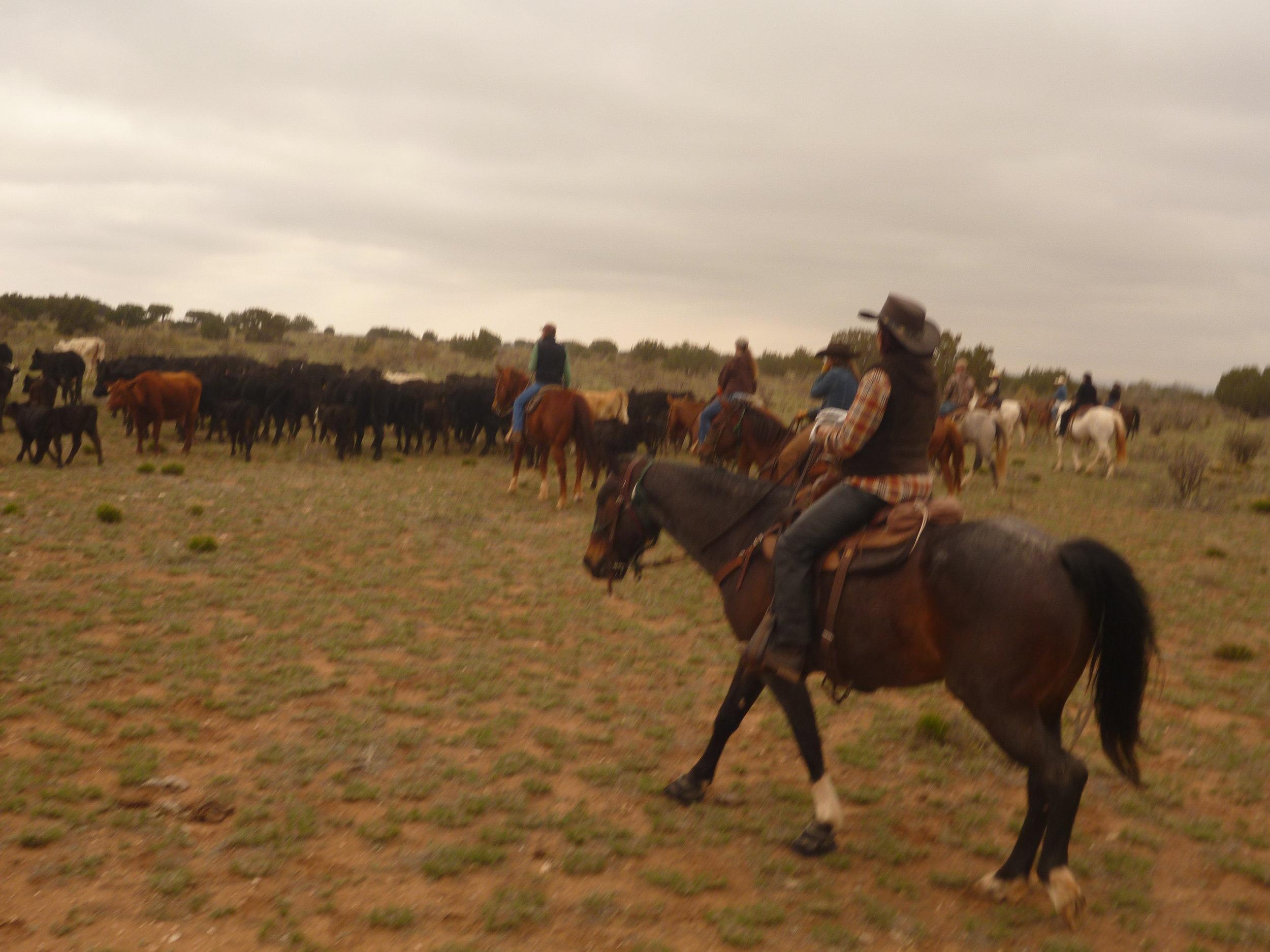 Found them :-) Driving the cattle to the pens.  Gefunden :-) Viehtrieb der Rinder zu den Pens.