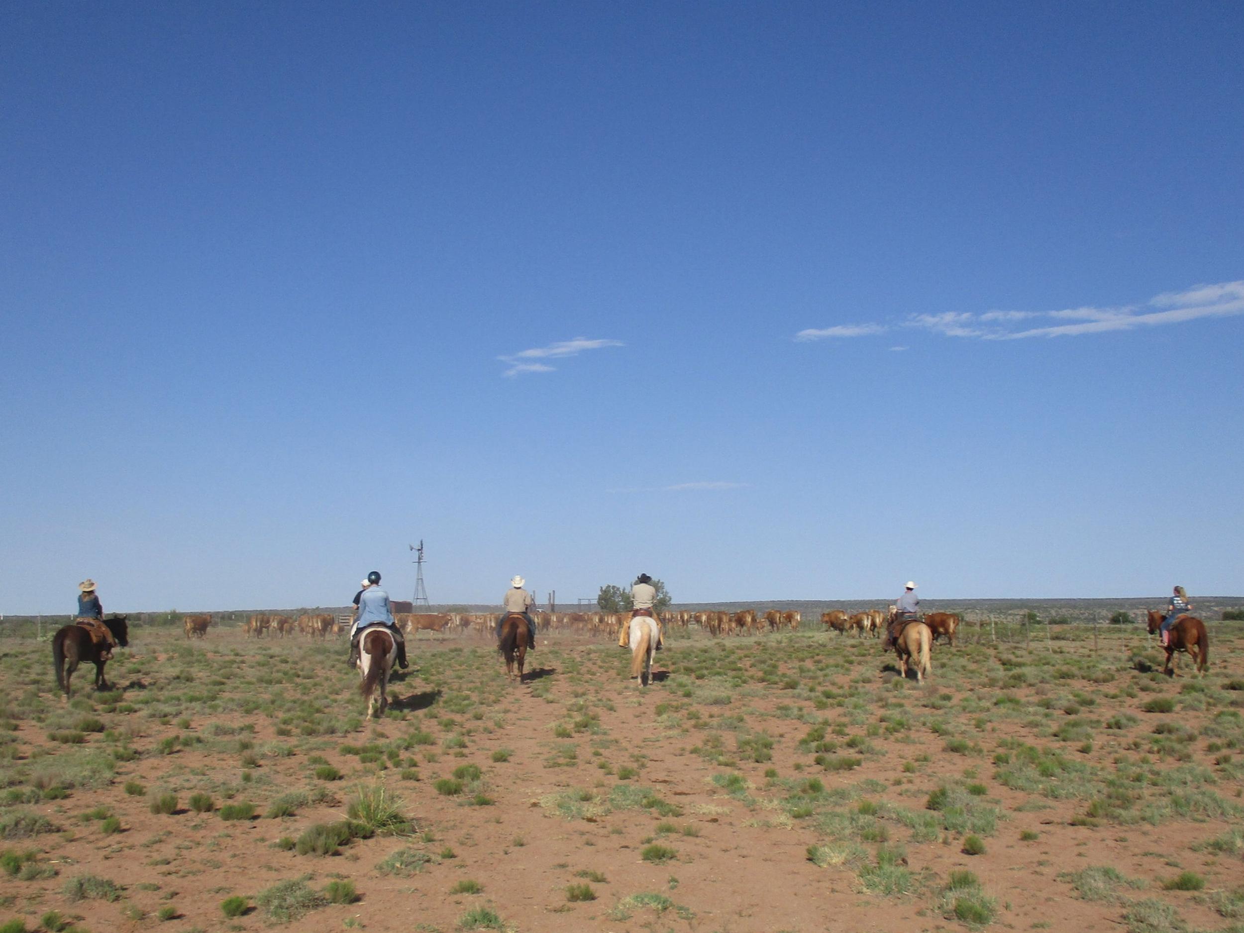 Family Robbins needed help gathering their cattle, so we loaded up the horses and went.  Familie Robbins brauchte Hilfe ihre Rinder einzutreiben, also haben wir die Pferde aufgeladen und sind los.
