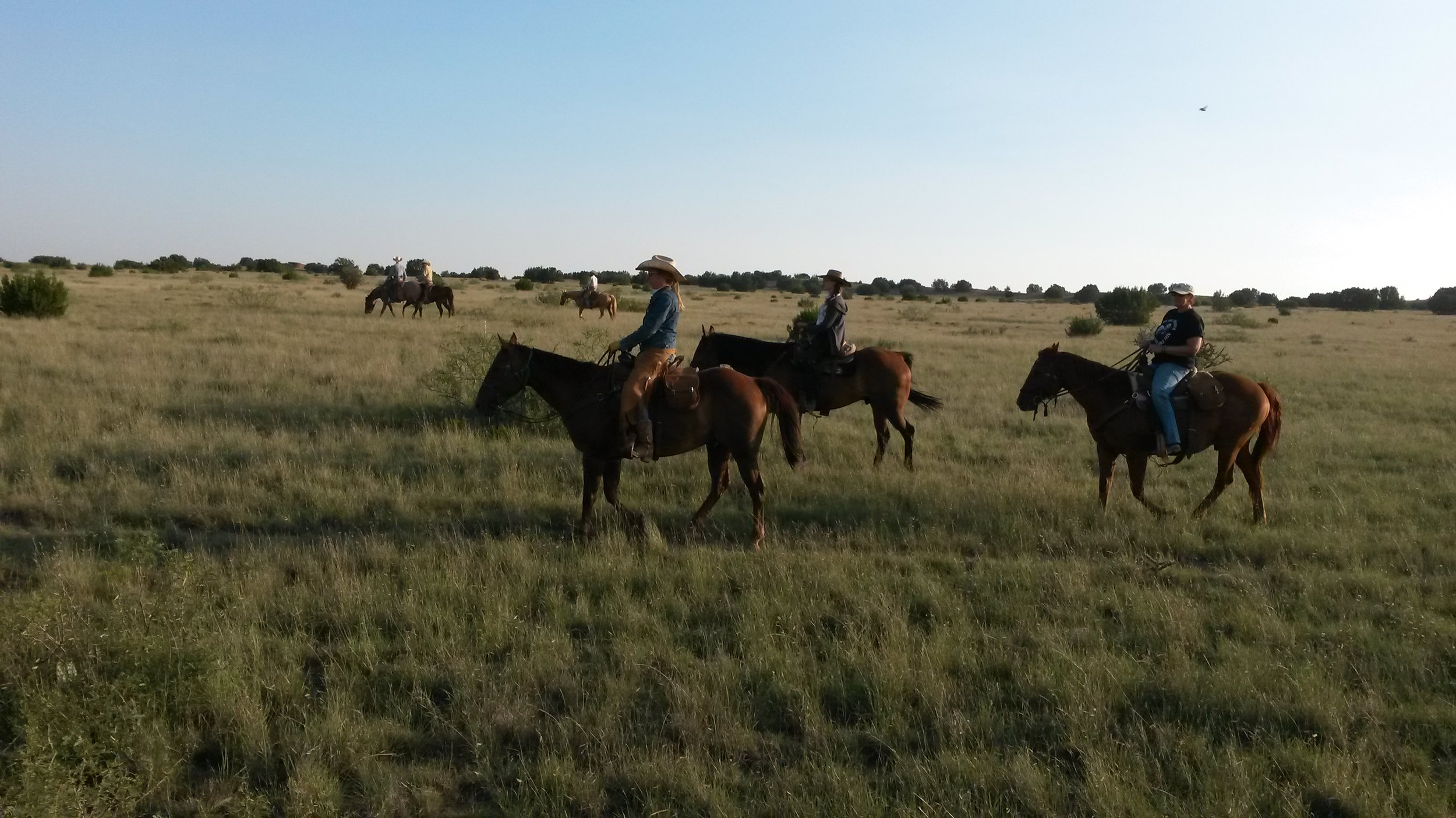 Andy on Snickers, Pia on Kip and Birgit looking for cattle.  Andy auf Snickers, Pia auf Kip und Birgit auf Butch auf der Suche nach Rindern.
