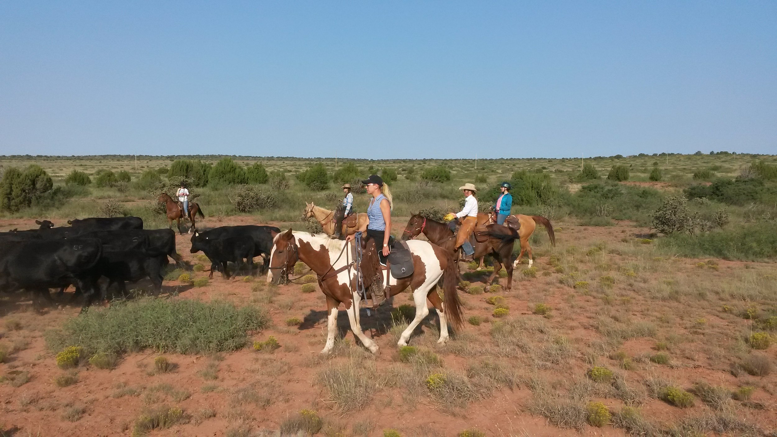 Our team pushing the cattle (front to back): Christina on Dolly, Andy on Snickers, Katrin on Whiskey, Pia on Johnny...  Unser Team beim Viehtrieb (von vorne nach hinten):Christina auf Dolly, Andy auf Snickers, Katrin auf Whiskey, Pia on Johnny...