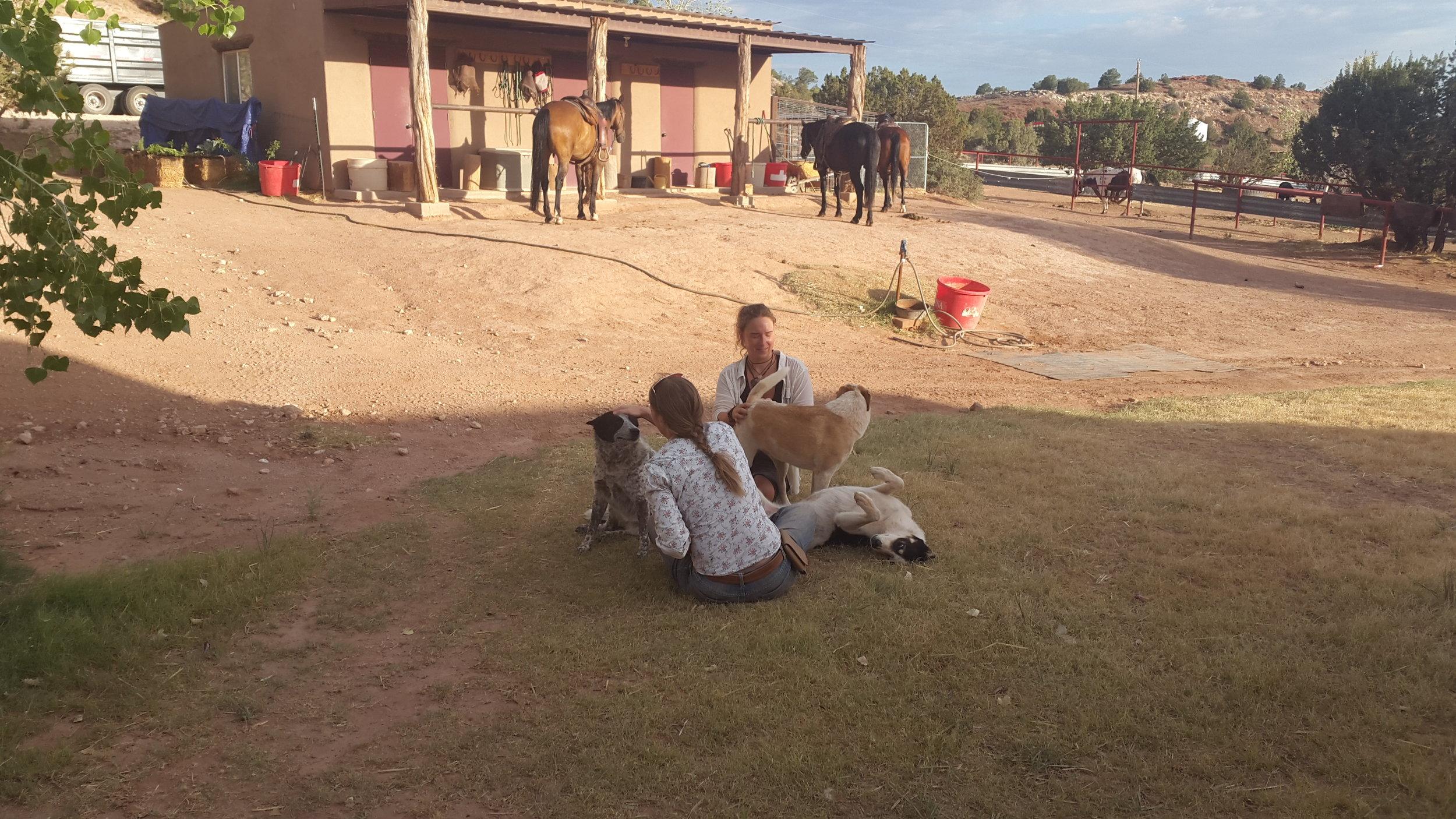 Time to pet the dogs in-between while the already saddled horses are waiting for the action.  Zeit um die Hunde zu streicheln, während die bereits gesattelten Pferde auf den Aufbruch warten.