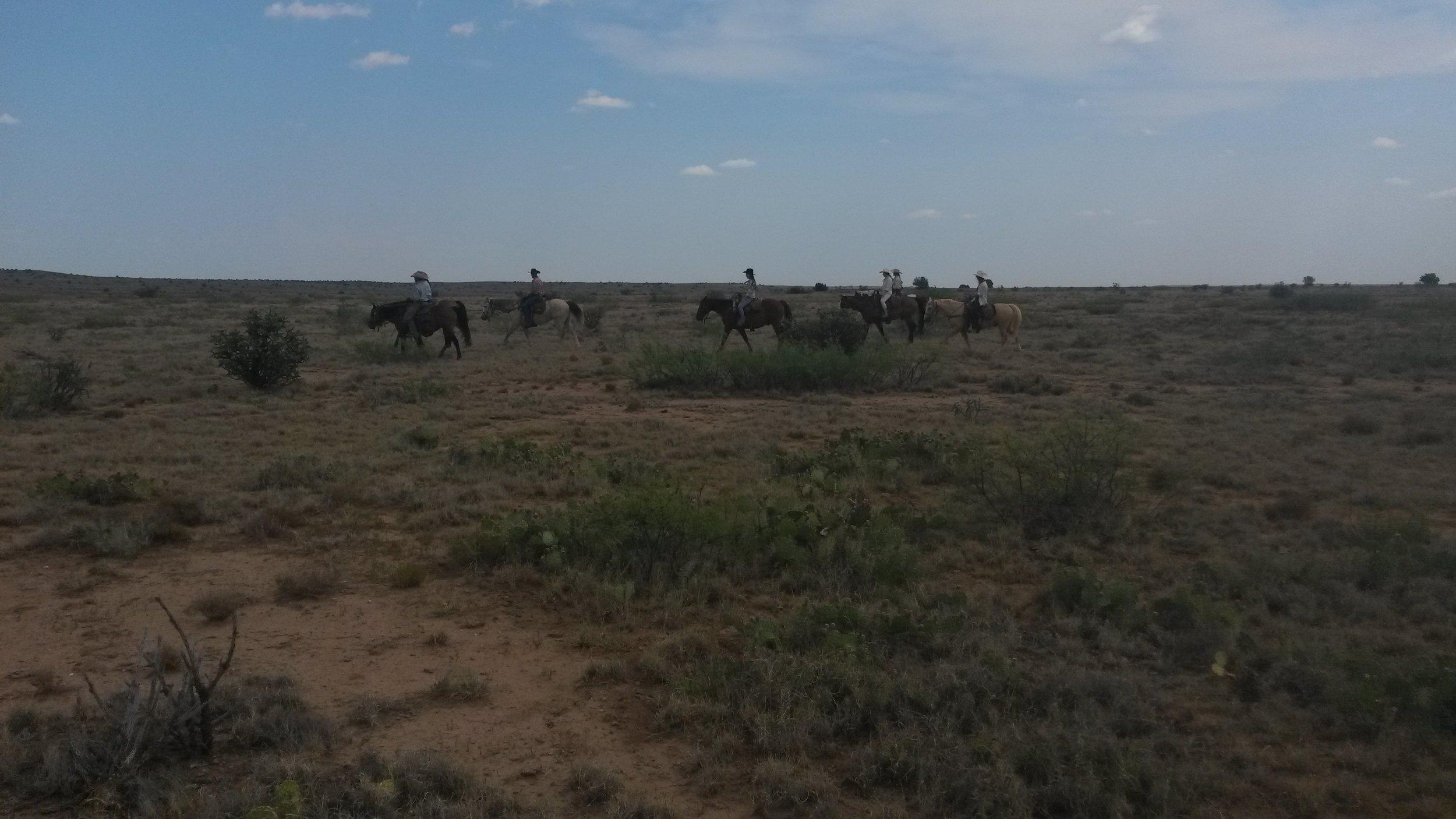 Our team (incl. guests of course) on our way to find the cows in the next pasture.  Unser Team (natürlich inkl. Gäste) auf dem Weg um die nächsten Kühe in einer anderen Weide zu finden.