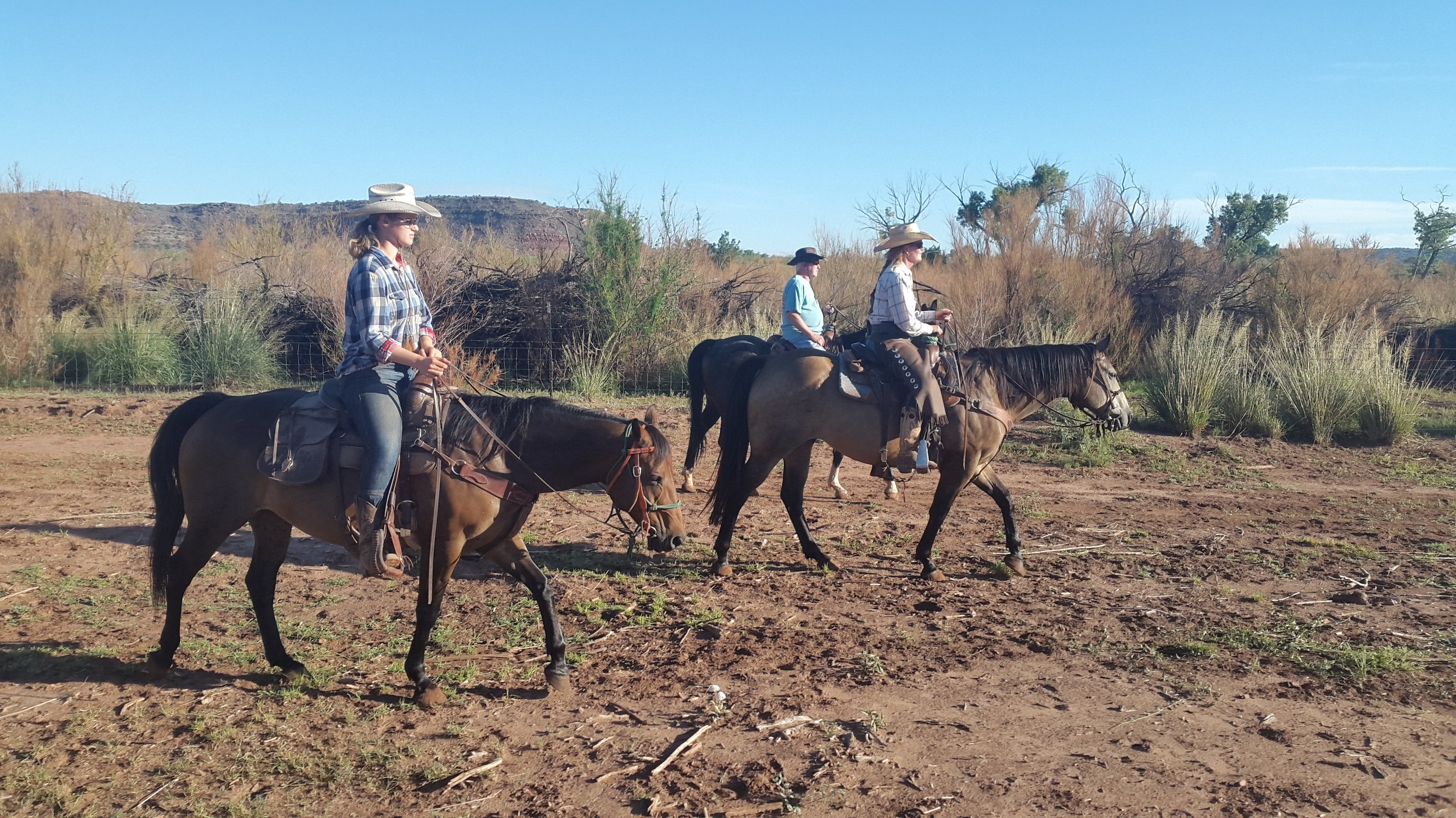 The next day we headed out to the river pasture. On the way to the cattle (left to right): Leonie on Robin, I on King and Stu on Ricky.  Am nächsten Tag waren wir in der Flussweide unterwegs. Auf dem Weg zu den Rindern (von links nach rechts): Leonie auf Robin, ich auf King und Stu auf Ricky.