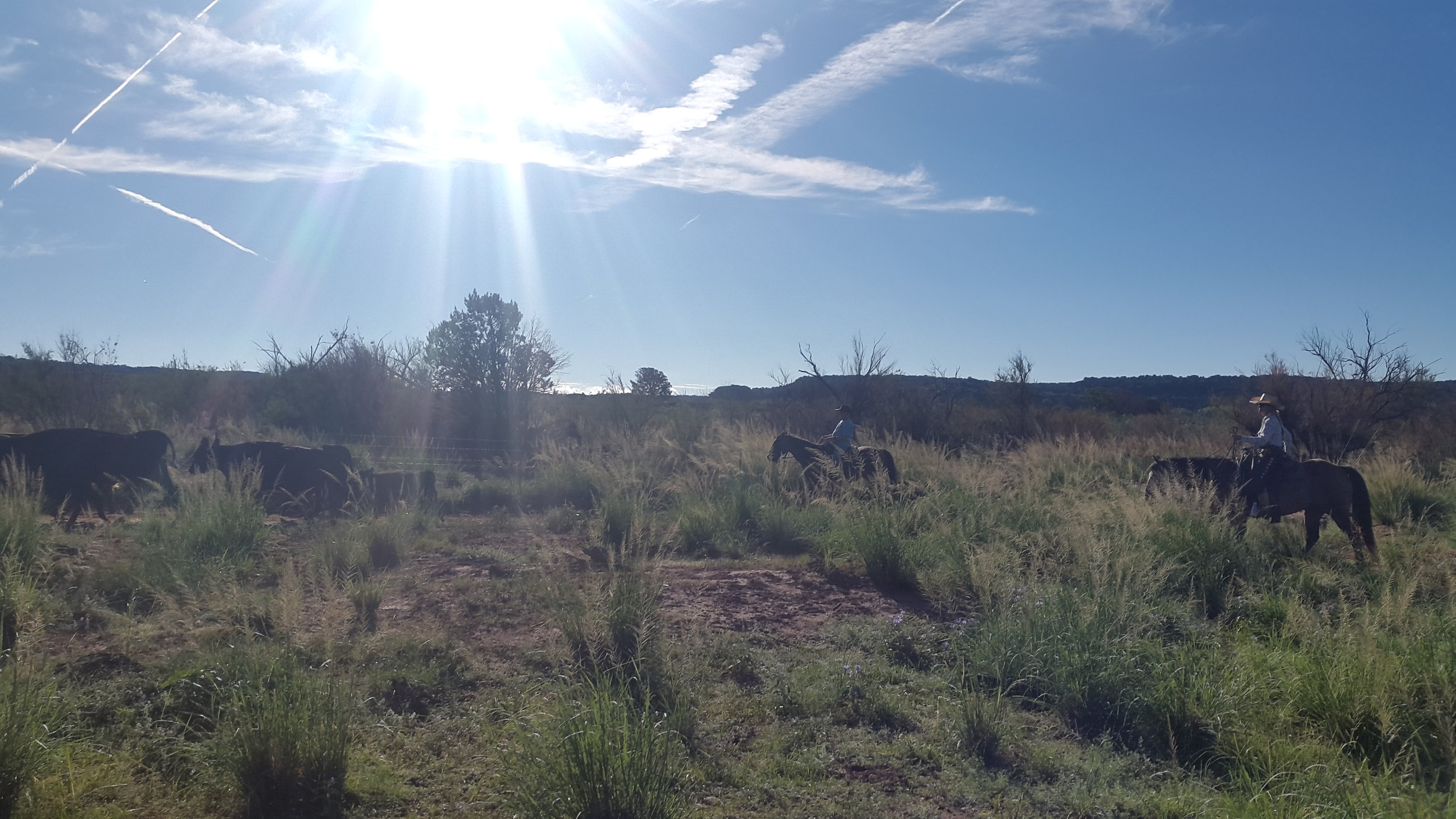 It was a beautiful day! Stu (left on Ricky) and I (right on King) are driving the herd.  Es war ein wunderschöner Tag! Stu (links auf Ricky) und ich (rechts auf King) treiben die Herde an.