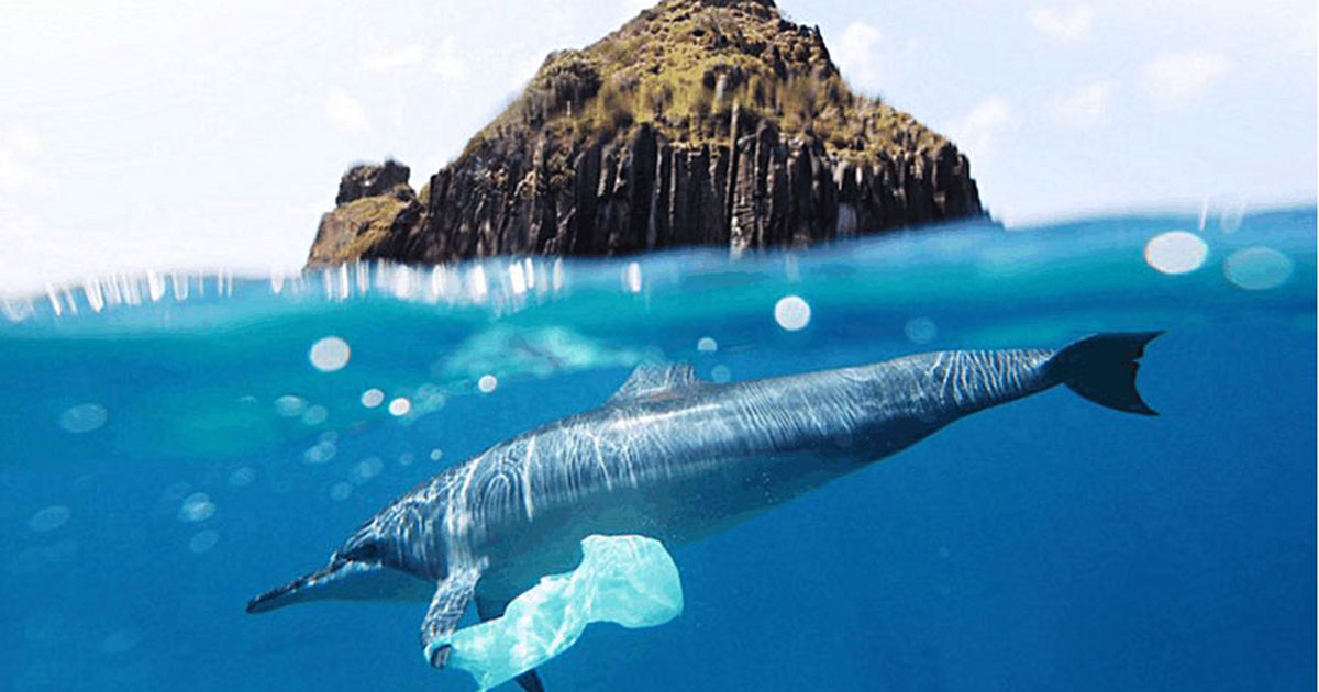 Plastic bag regulation minimizes windblown litter, marine impacts, waste management issues, and more. -