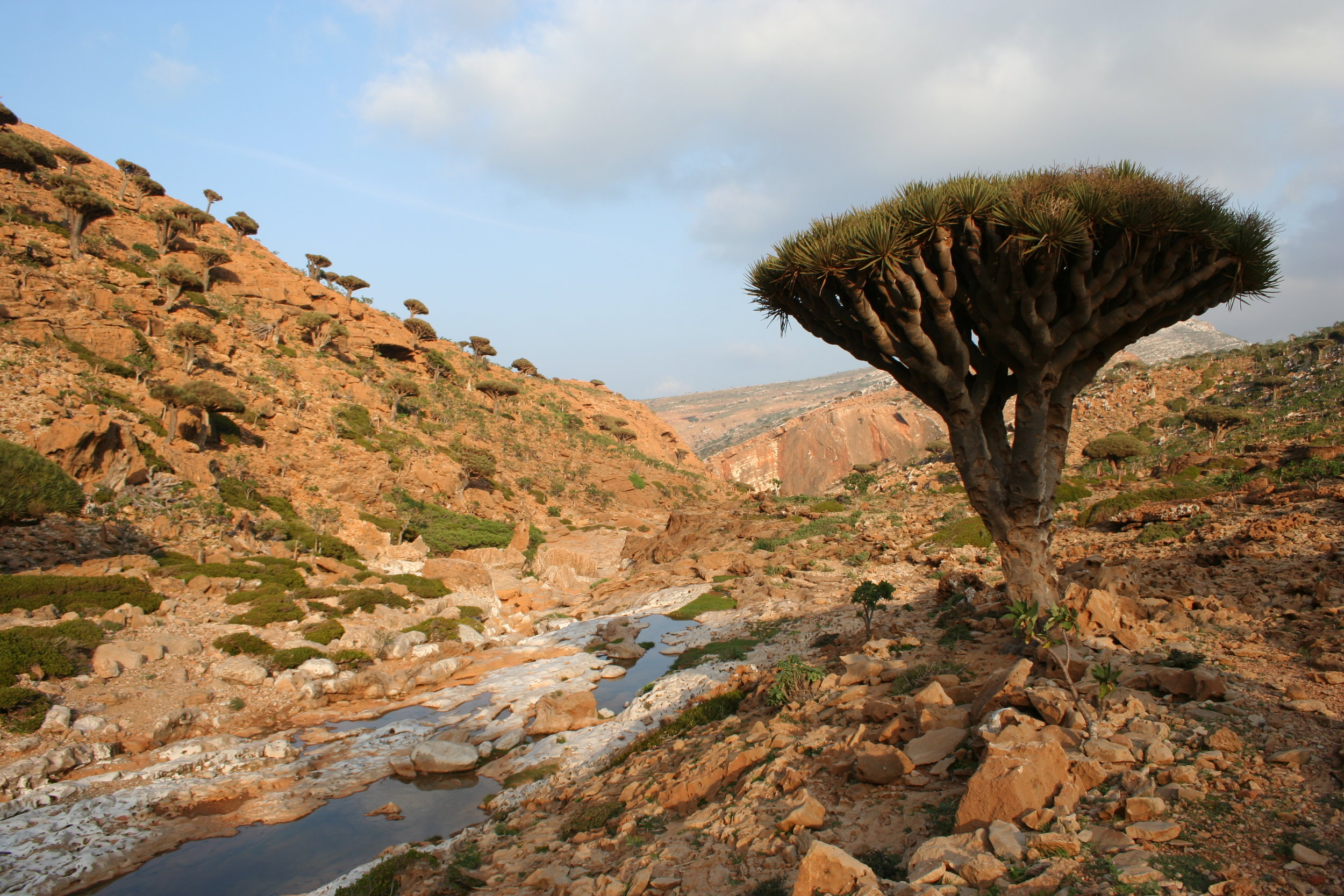 Socotra, Yemen. Photo Credit: HopeHill. Used under  Creative Commons License .