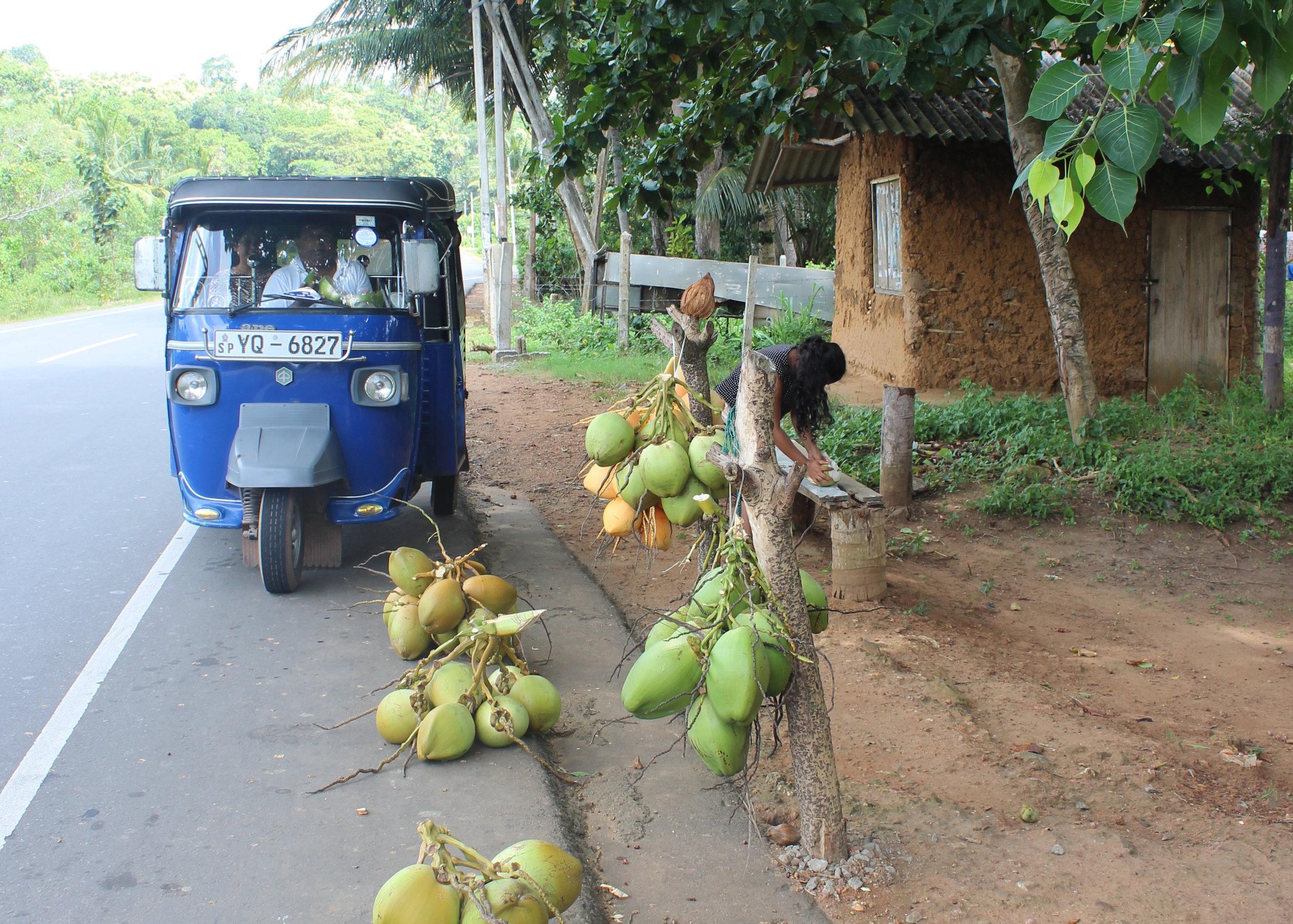 Coconut water on sale near Matara, Sri Lanka