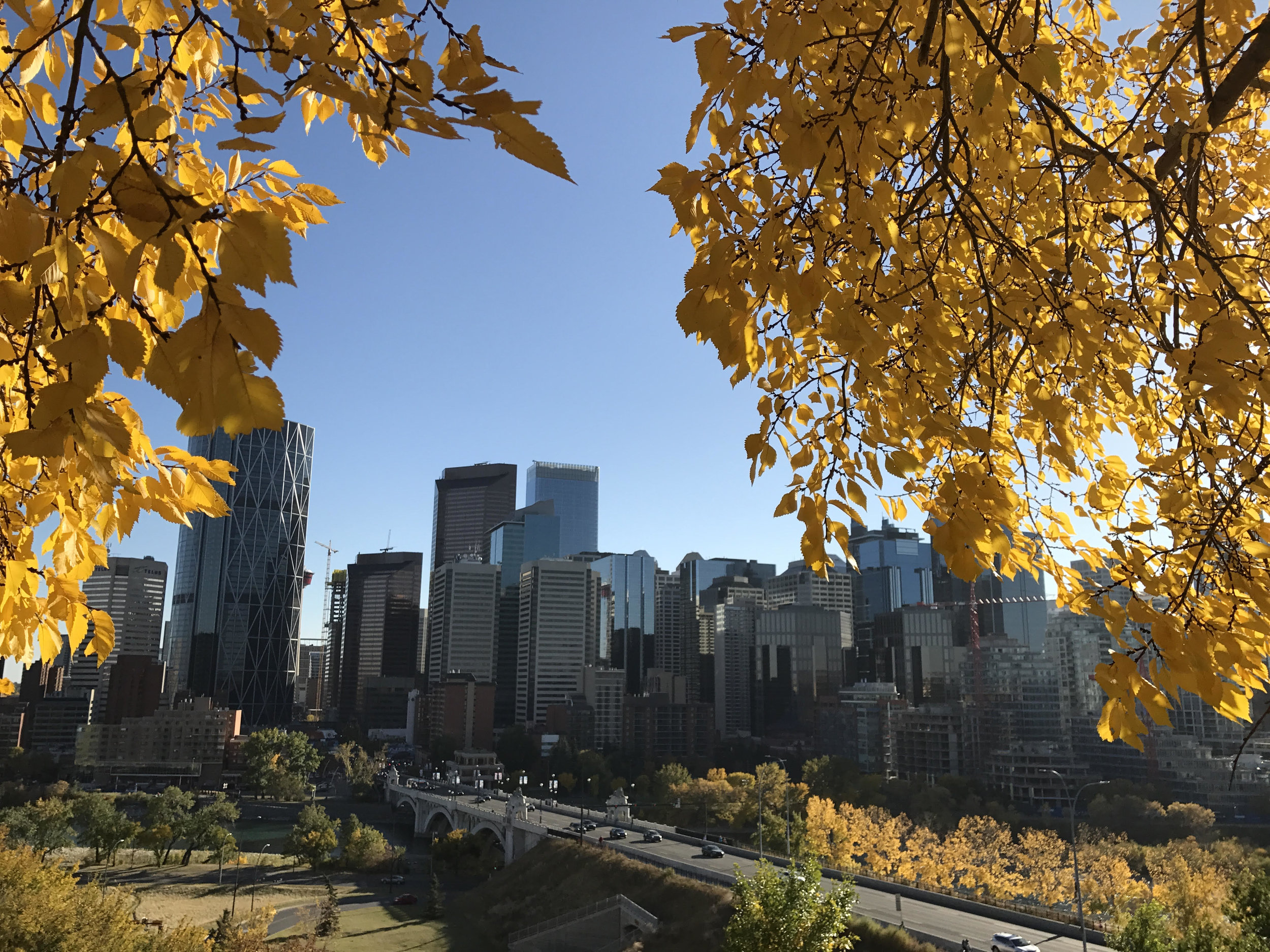 View to downtown Calgary in fall. Image Credit: Simon Greenwood