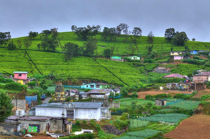 Nuwara Eliya, Sri Lanka. Photo Credit: Jacek Lesniowski