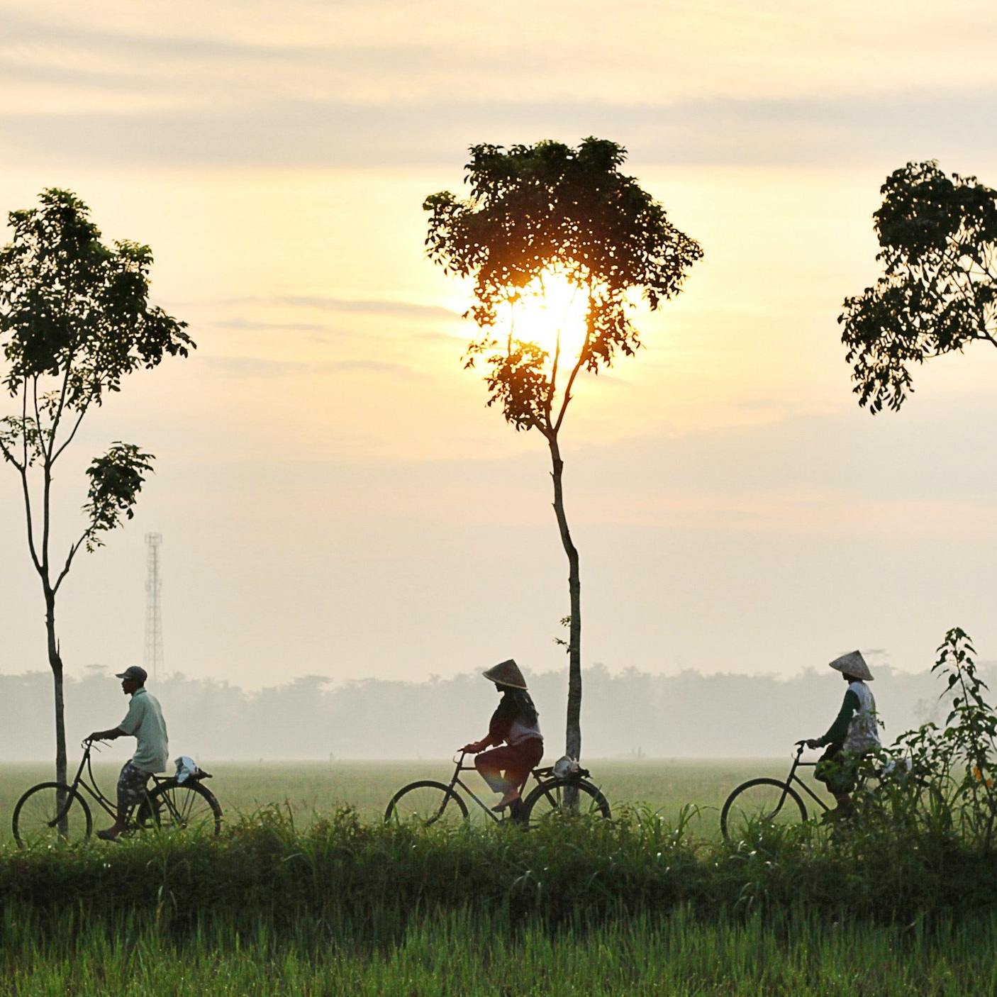 """- Hannah Balfour, Galle local - """"Idle Bikes Tours are a unique way to explore the local area - you get to ride through paddy fields, spot local wildlife such as buffalo and peacocks - and occasionally you also get to conquer a big hill""""."""