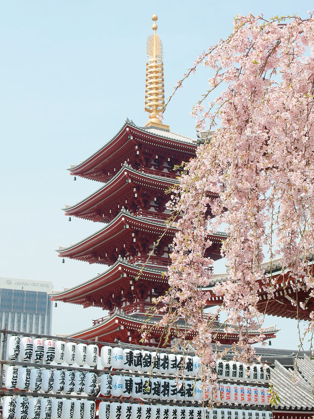 In season, cherry blossom can be found all over Japan, such as in Sensō-ji, Tokyo.