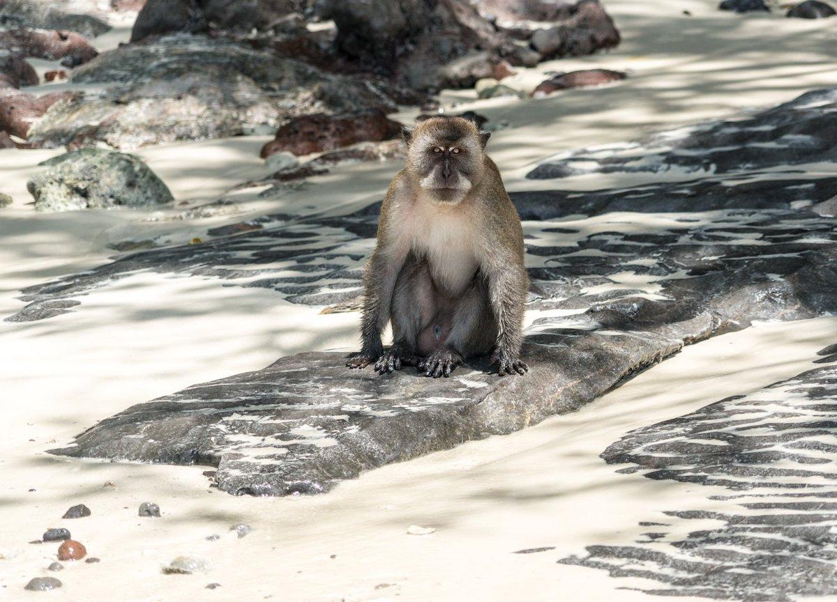 'Monkey Beach' in Thailand