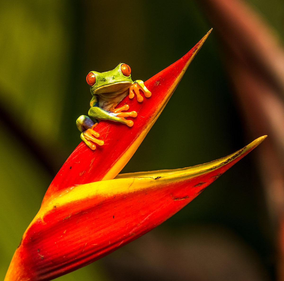 Wildlife in Costa Rica. Photo Credit: Zdeněk Macháček