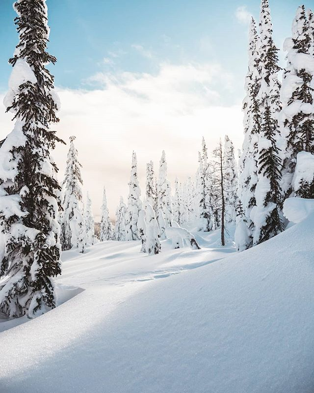 An empty pow feild has gotta be the one of the most satisfying things to look at 🌨️ 👉 Swipe for another photo from @whitewaterskiresort