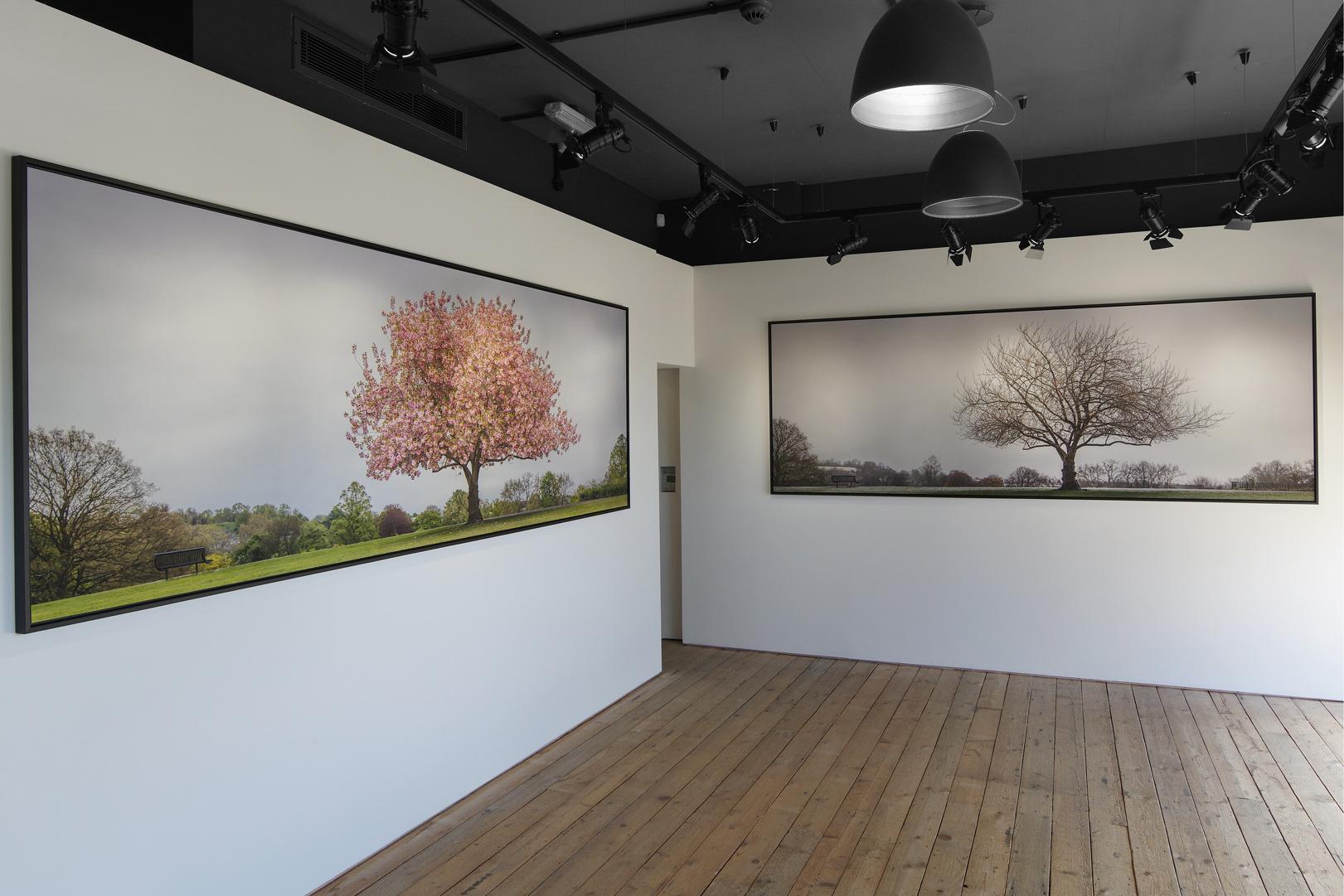Wild-Cherry-03-Main-Gallery-Revised-Web.jpg