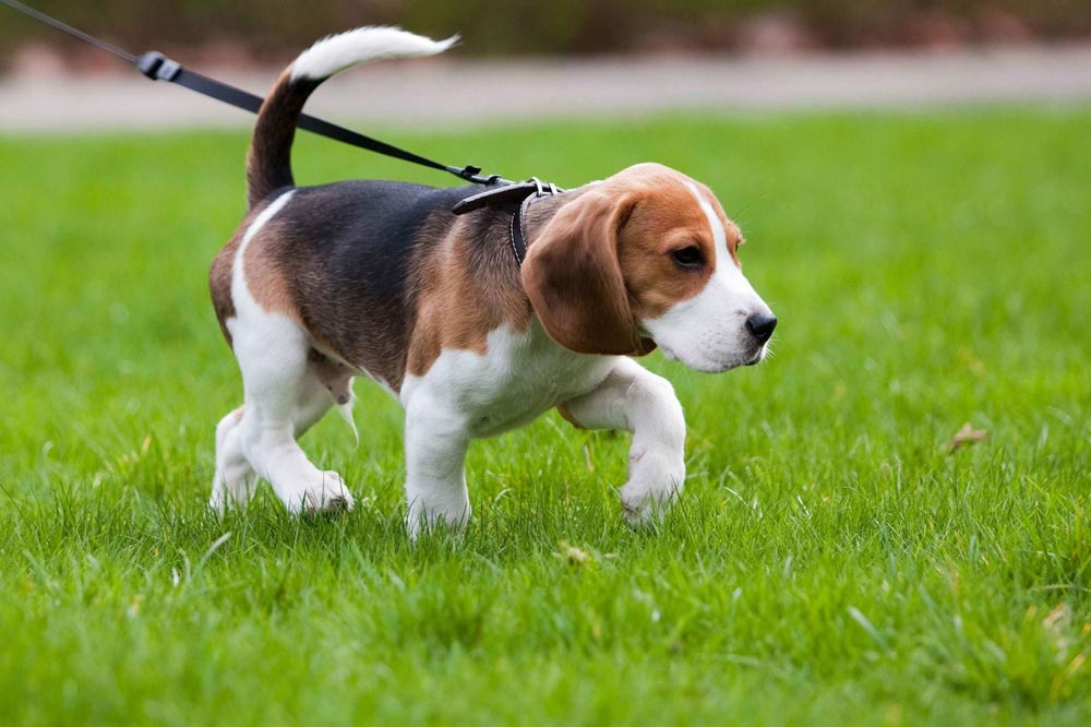 Obedience Training - Your dog will learn, Come, Place, Sit, Down and Heel