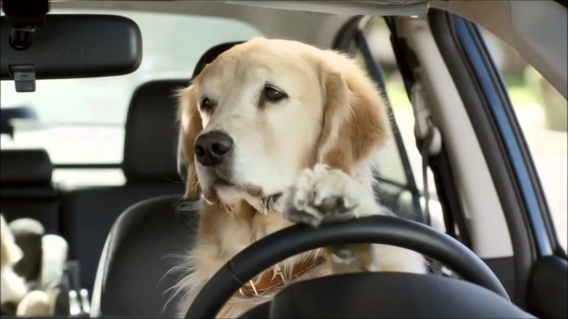 Transportation Advantage - Free Pick Up and DeliveryClimate controlled vehicle designed for dog transportingLarge Pick Up ZoneThe Best Value in the Dog Training Industry!