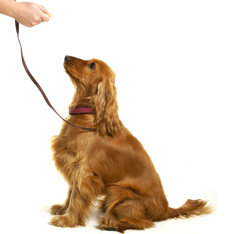 In home Training - learn with your dog...