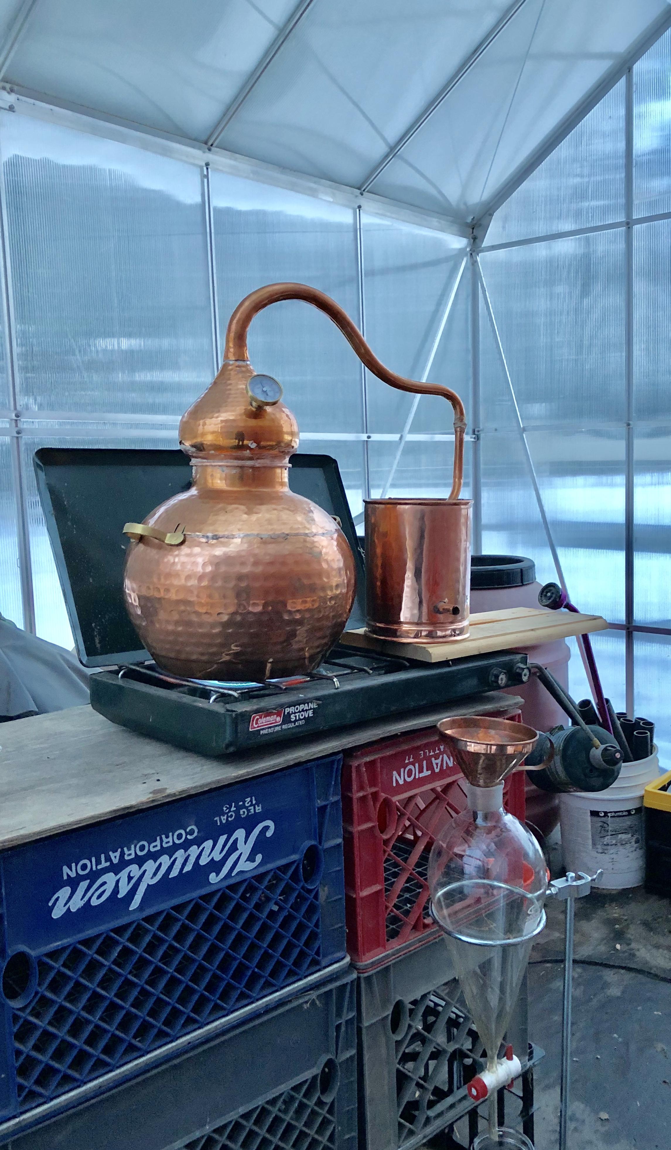 Grand Fir Christmas tree distillation