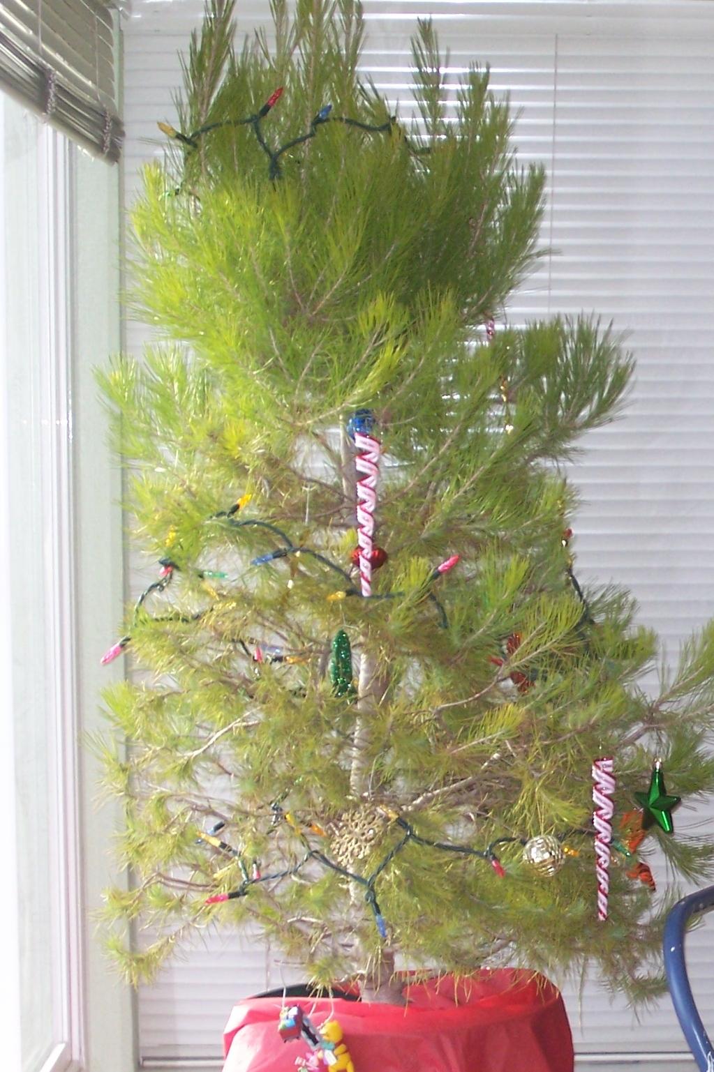tree2007.jpg