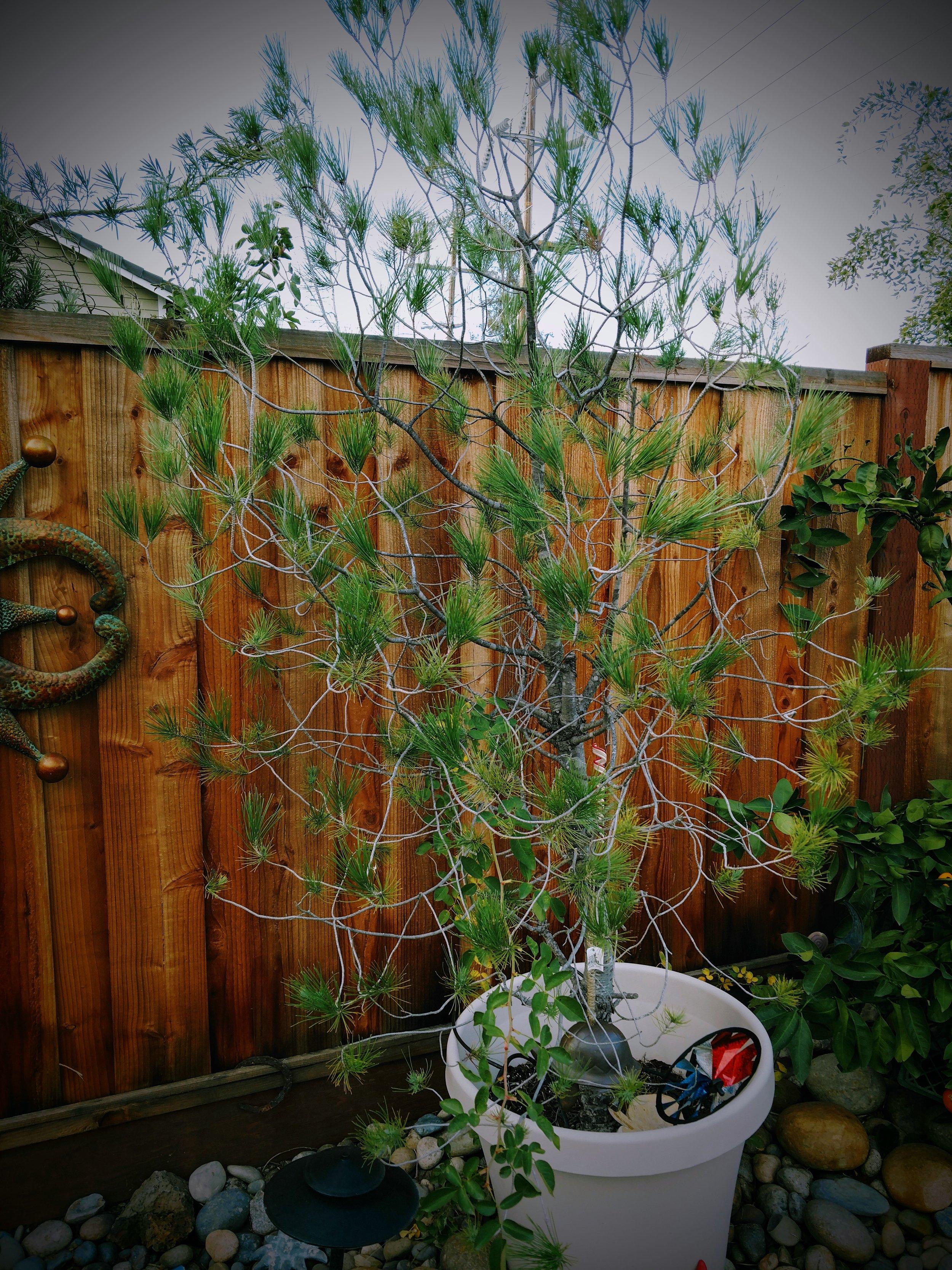 outsidetree.jpg
