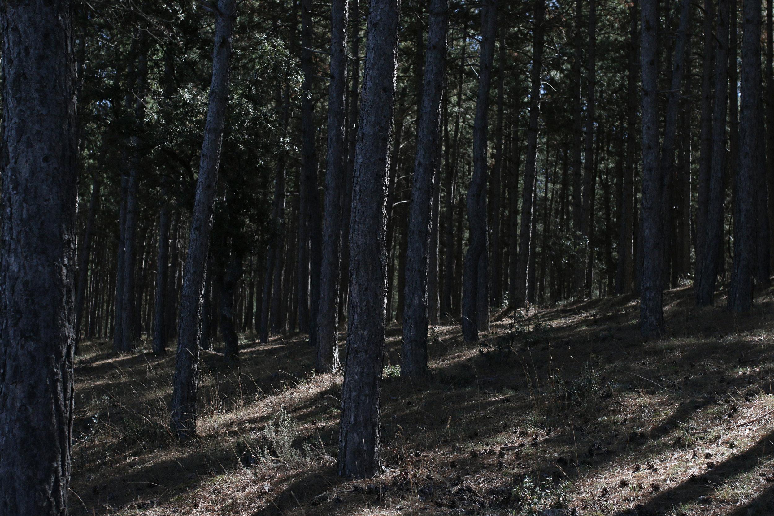 AK Image.JPG