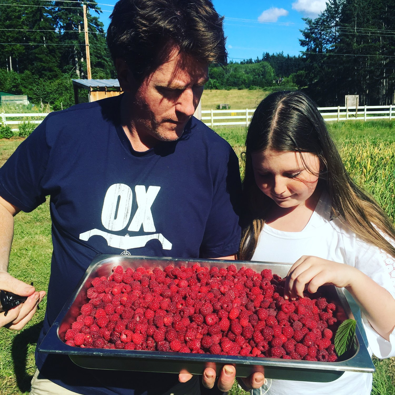 Picking orchard Kitchen Berries
