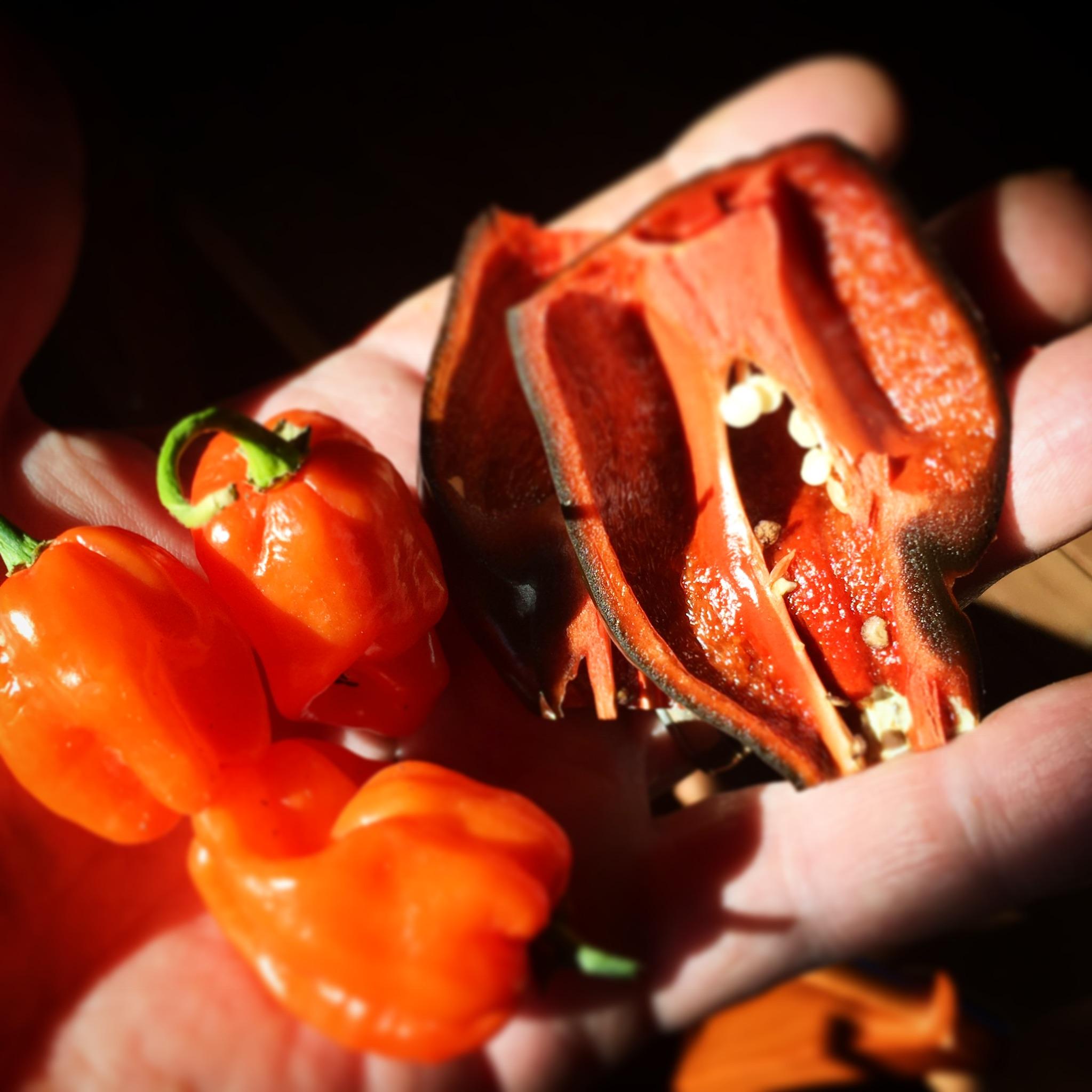Habeneros & Red Chili