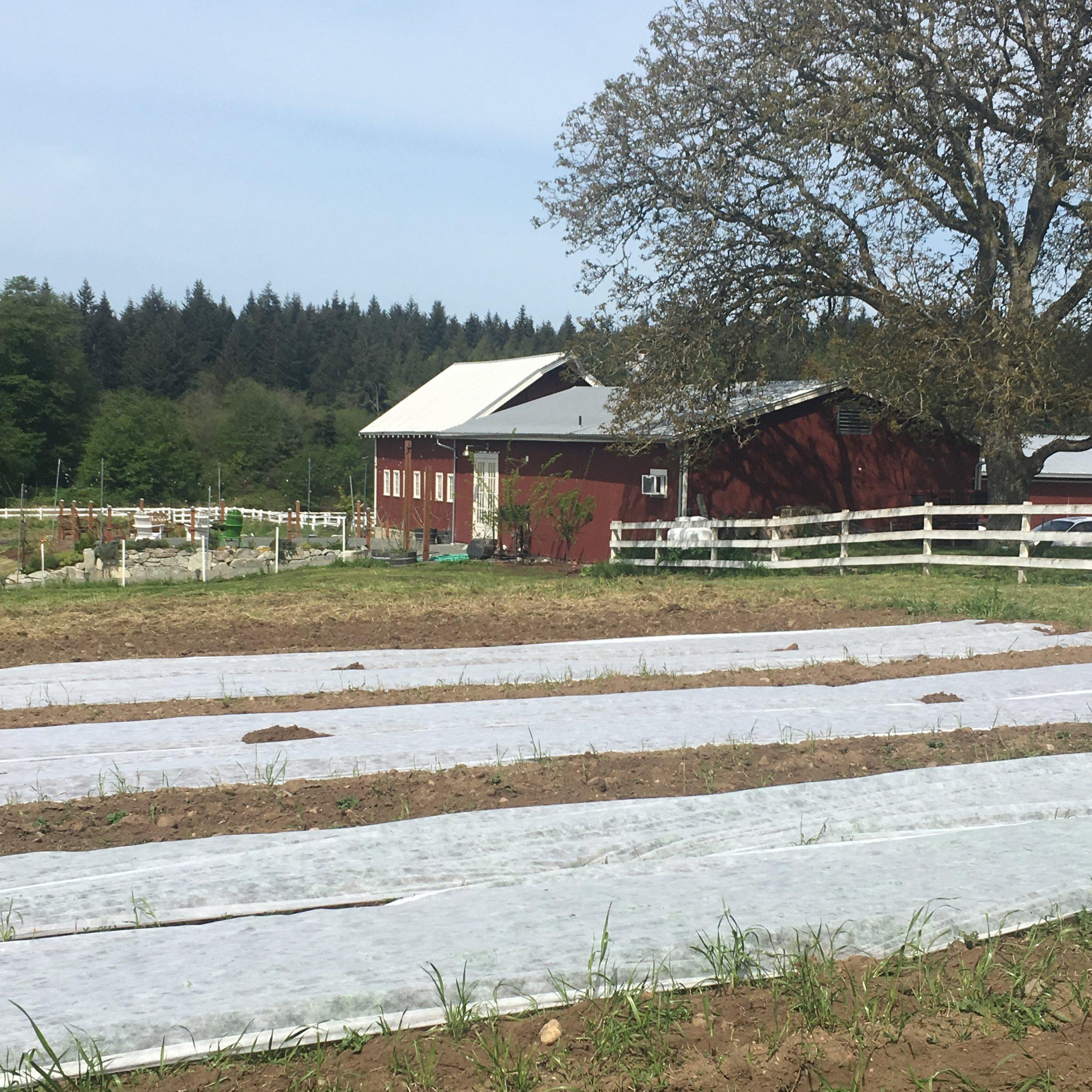 Farm to Table!