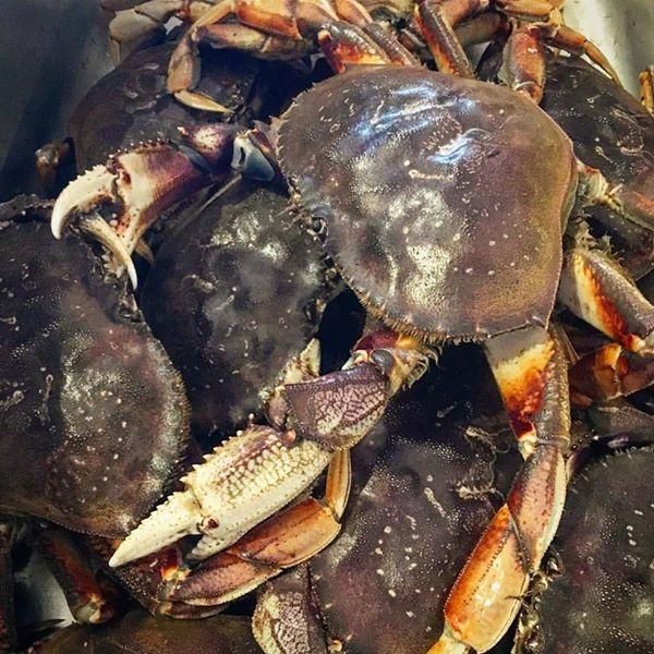 Dungeness crab chef vincent orchard kitchen.jpg