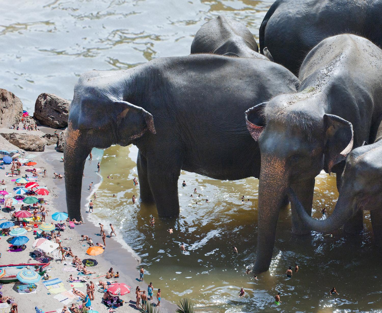 [elephant beach]