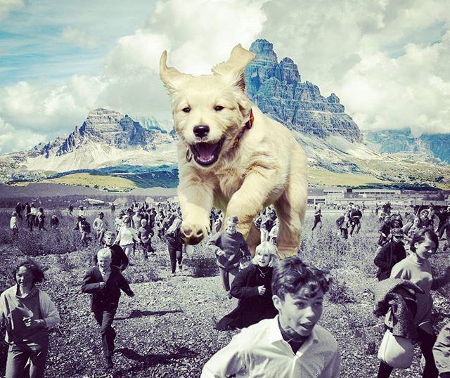 🐶 . . #hashtag #dogsofinstagram