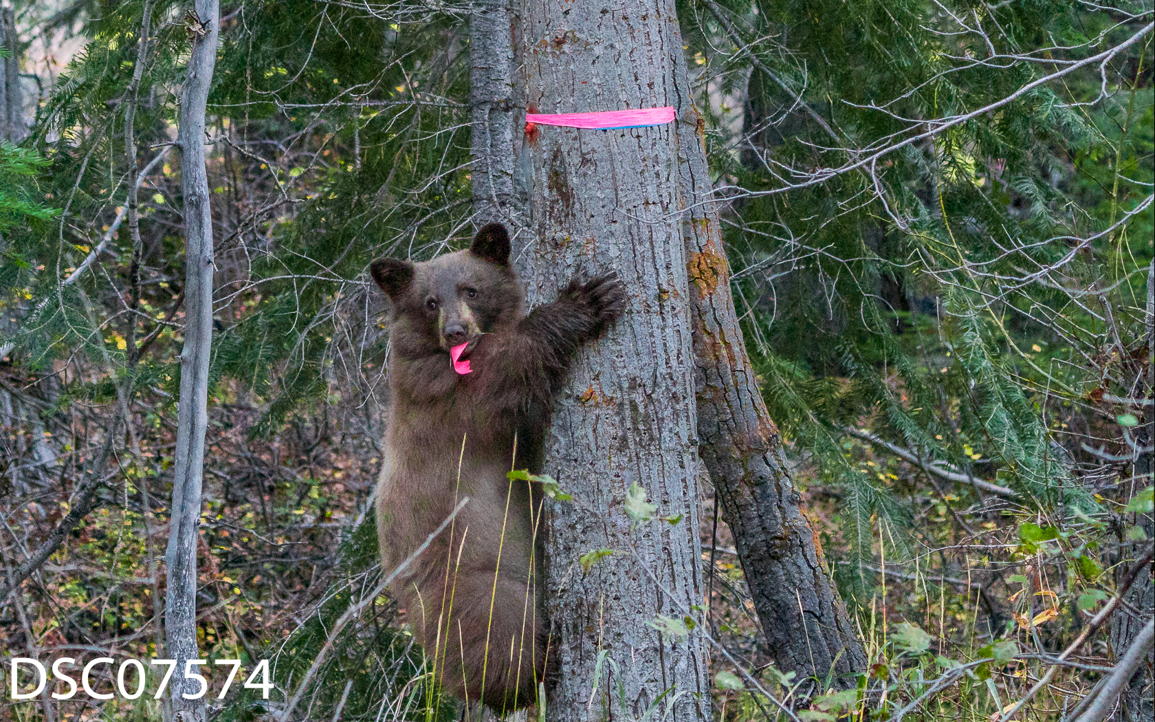 Bears n People-02.jpg