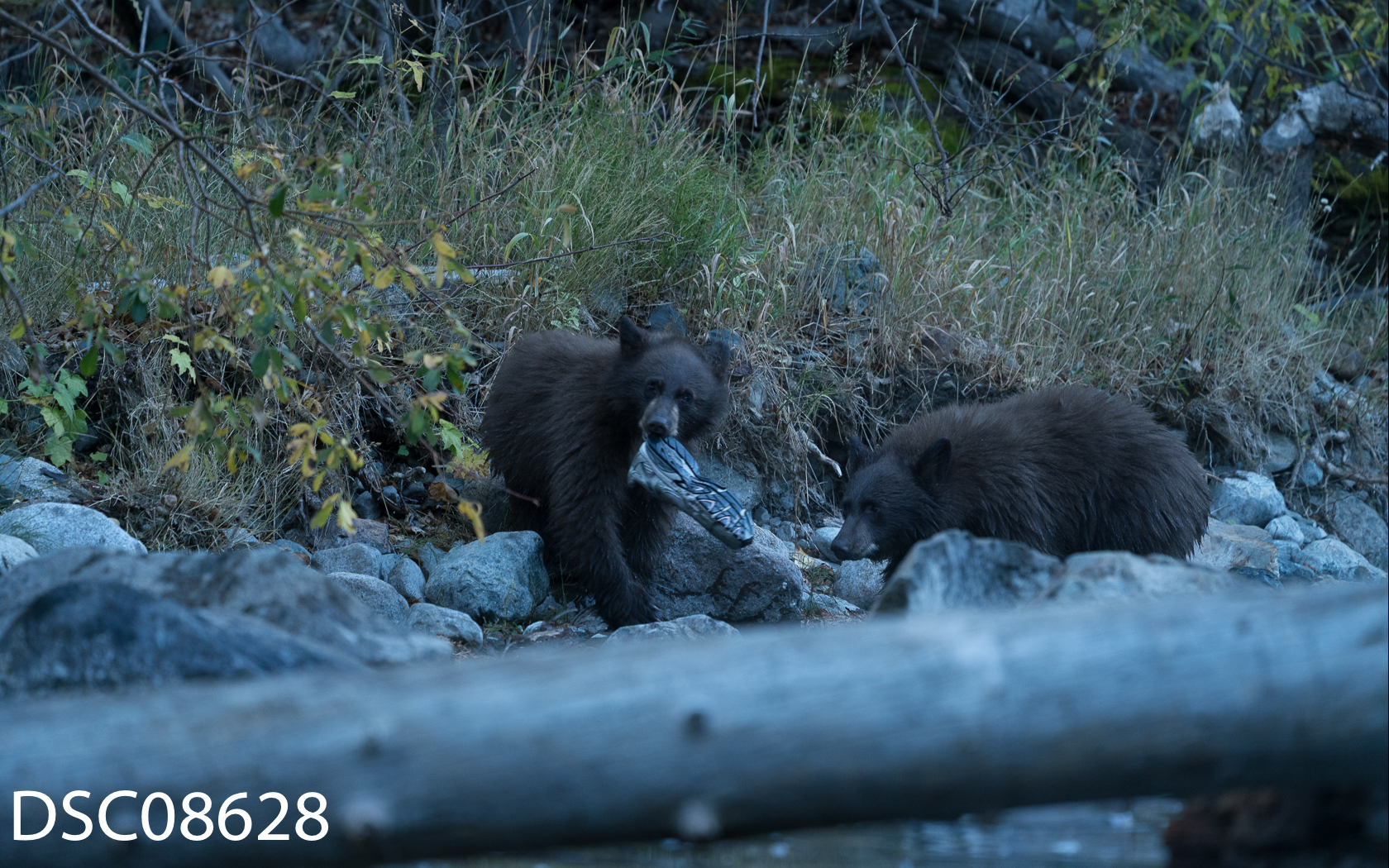 Bears n People-05.jpg