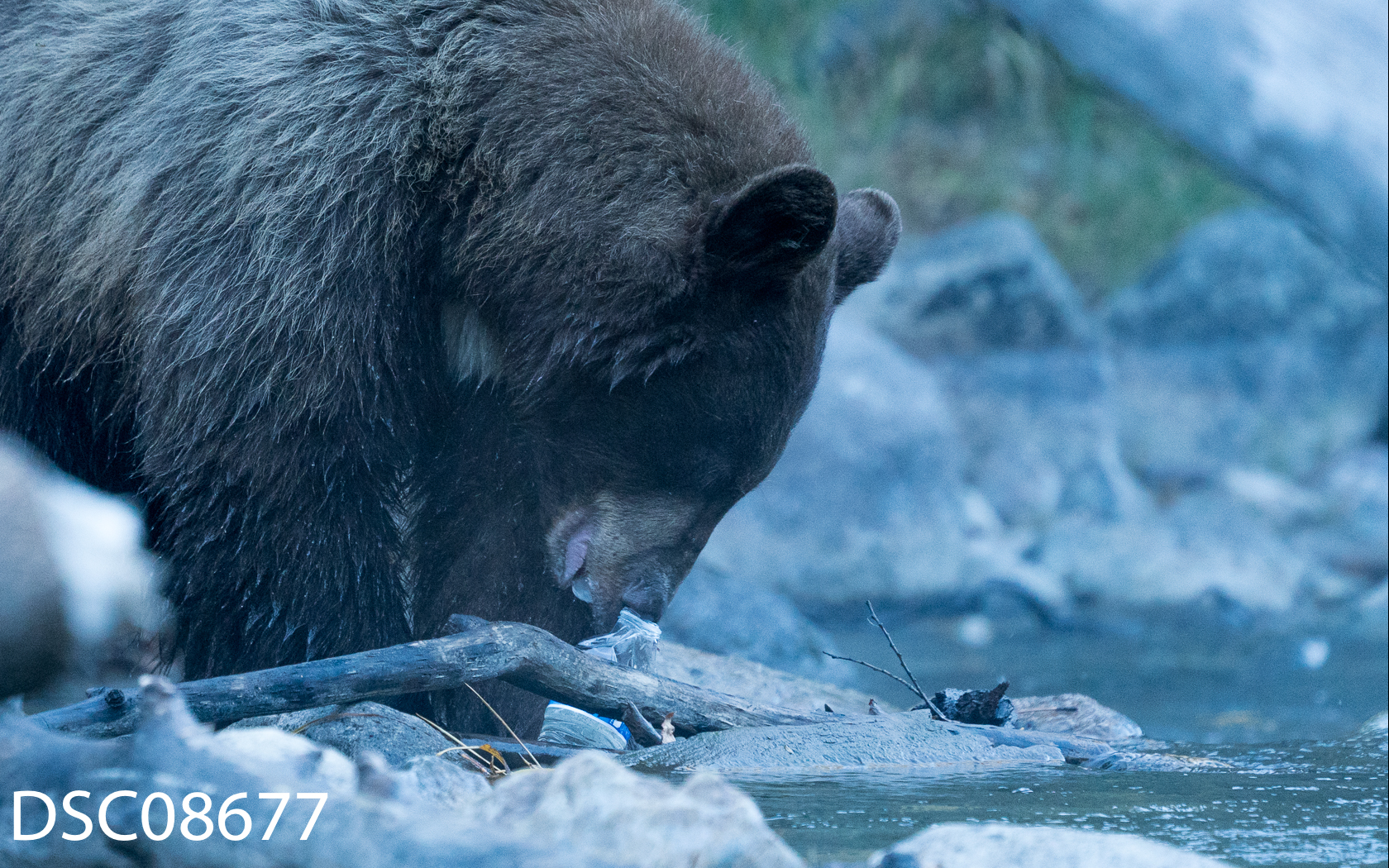 Bears n People-06.jpg