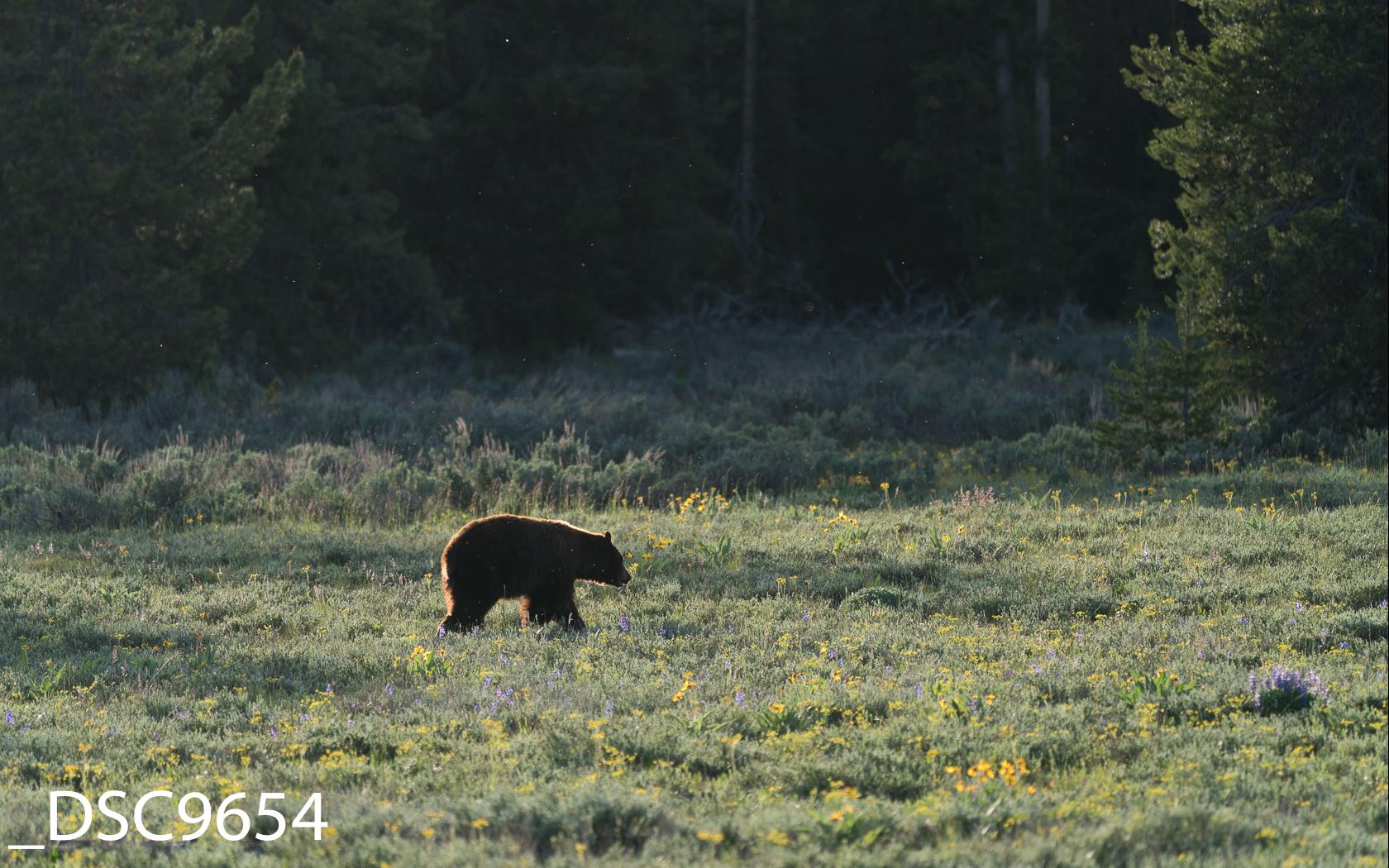 Just Bears-002.jpg